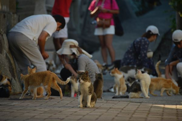 Cats mingle with the residents of Aoshima.